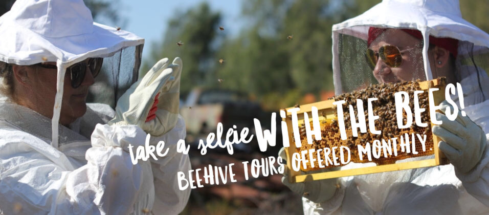 Beehive Tours San Diego